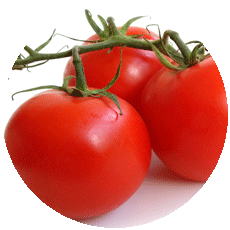 three red tomatoes on a green vine